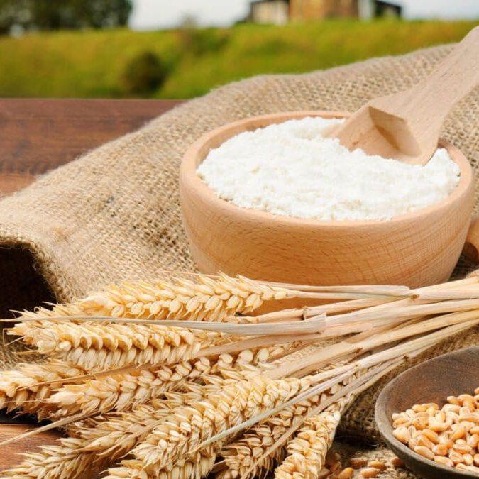 wheat and flour
